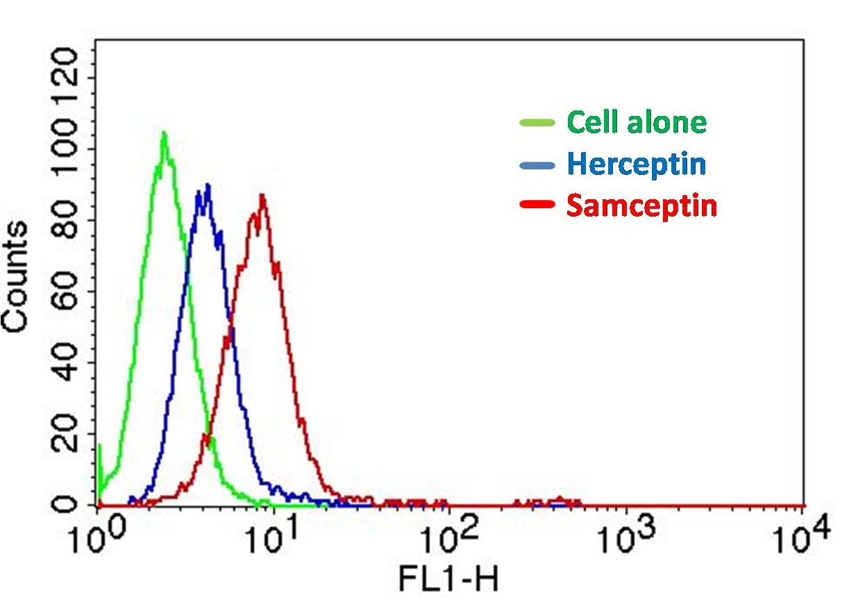 Figure-6: Epitope binding study by flow cytometric analysis. MCF-7 cells expressing HER2 antigen were treated with Herceptin and Samceptin (2 µg/10^6 Cells). Surface staining was done using FITC conjugated antibodies.