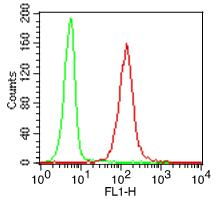 Fig-2: Intracellular flow analysis of TLR9 FITC conjugated in hPBMC (Lymphocytes) using 0.5 µg/10^6 cells of TLR9 FITC conjugated antibody (Clone: ABM1C51). Green represents isotype control; red represents anti-TLR9 FITC conjugated antibody.