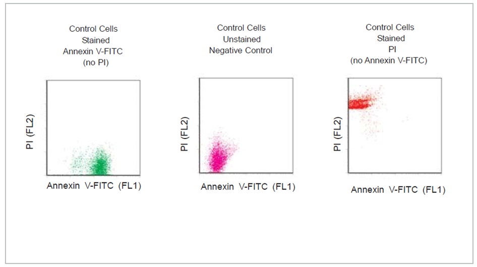 Annexin V-FITC Apoptosis Detection Kit