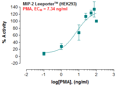 MIP-2 Reporter – HEK293 Cell Line
