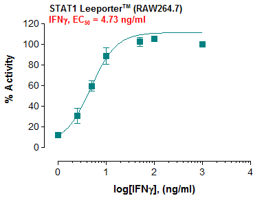 STAT1 Reporter – RAW264.7 Cell Line