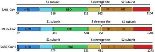 Recombinant 2019-nCoV S Protein RBD-SD1 (C-6His)