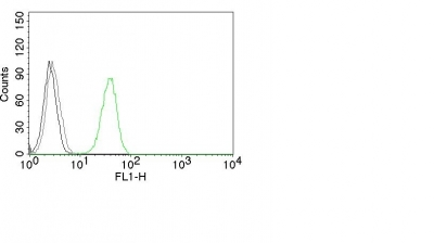 Monoclonal Antibody to CD31 / PECAM-1 (Endothelial Cell Marker)(Clone : C31.3)
