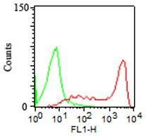 Fig. 1: Cell Surface flow analysis of hCD45RA in PBMC (Lymphocytes gated) using 1 µg antibody per 10^6 cells.  Green represents isotype control (ABEOMICS); red represents anti-hCD45RA antibody (36-3014). Goat anti-mouse FITC conjugated  secondary antibody was used (ABEOMICS).